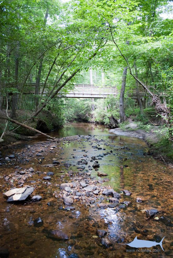 Campbell's Creek