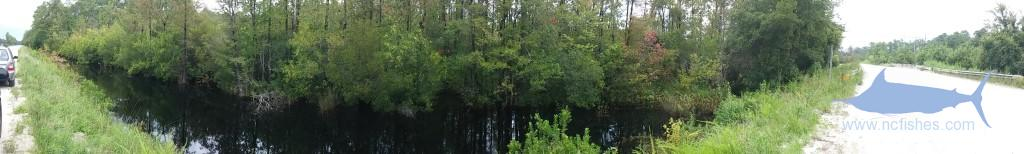 Black Swamp Creek