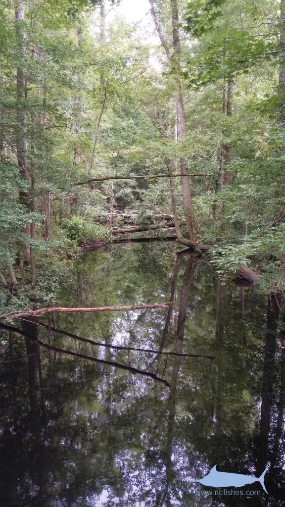 Holston Creek - Croatan National Forest