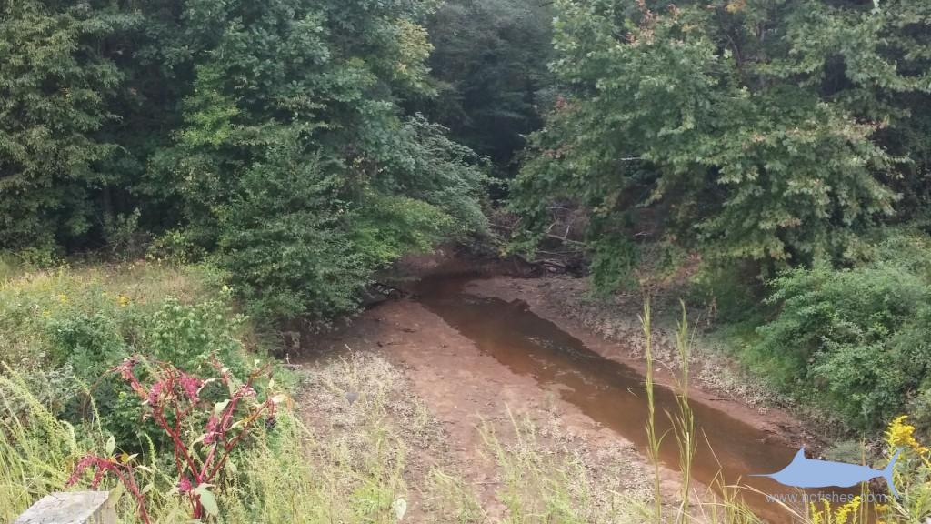 Cartledge Creek - Peedee River