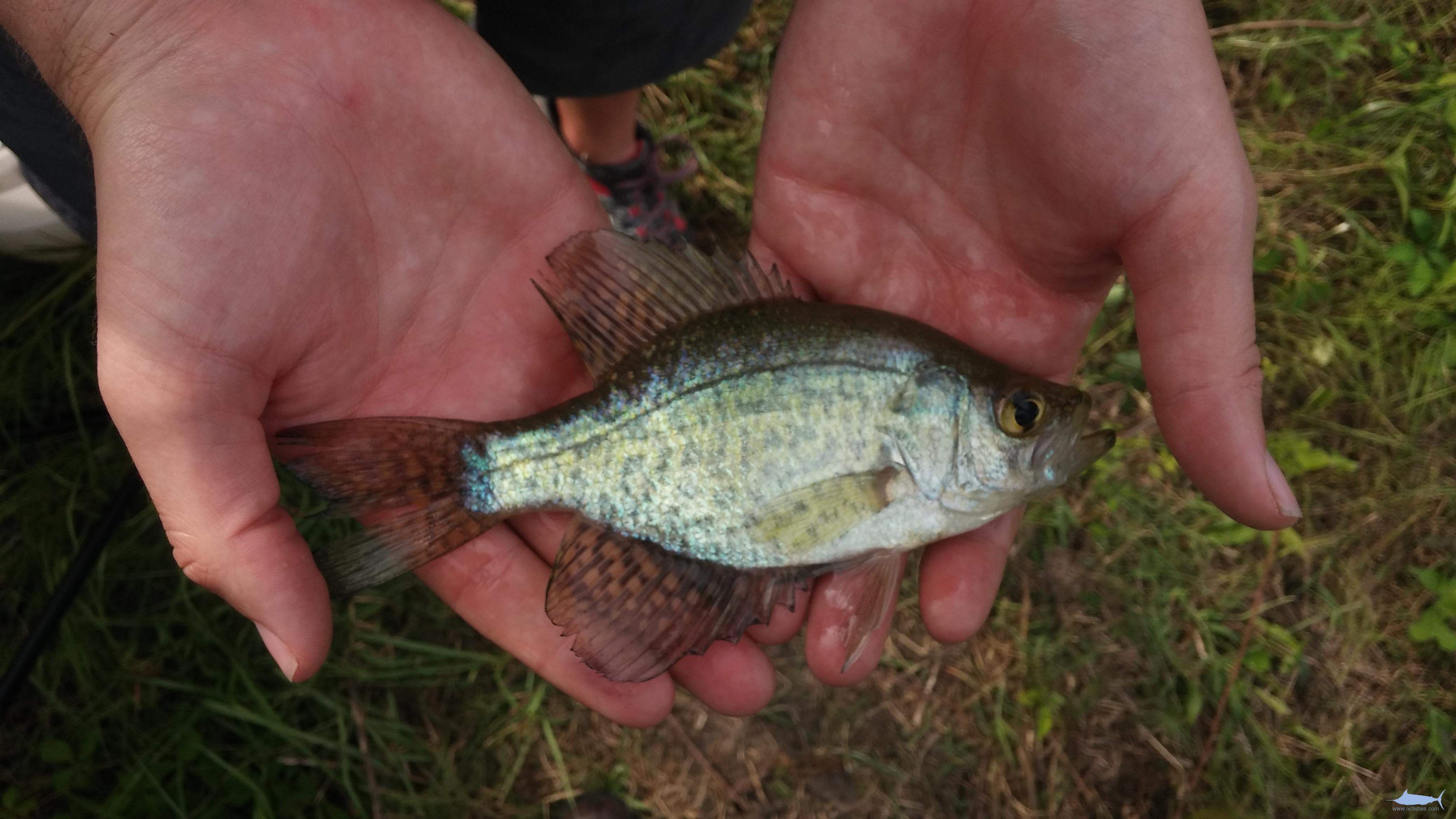 Collecting Trip – Fishes of North Carolina