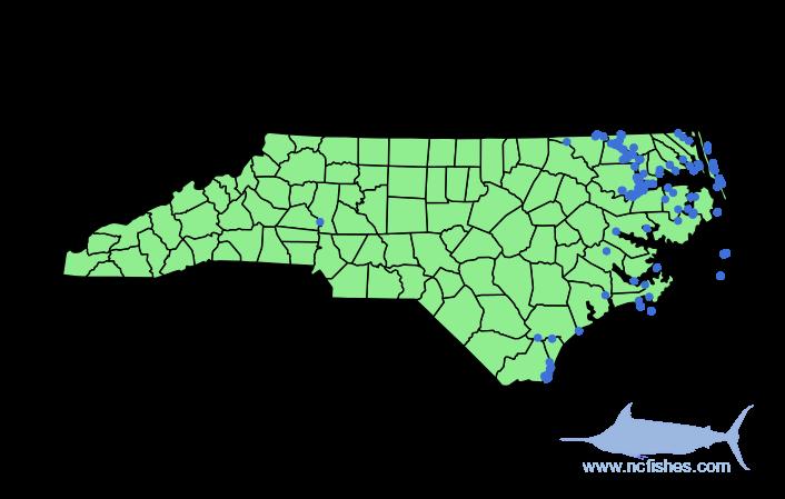 Alosa pseudoharengus Range in NC