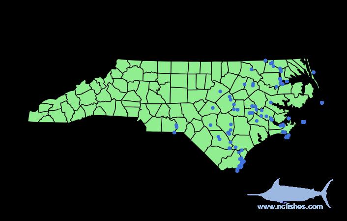 Alosa sapidissima Range in NC