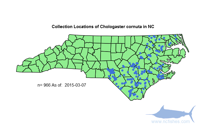 The Range of Chologaster cornuta in NC
