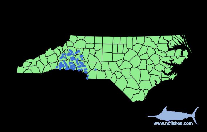 Cyprinella chloristia Range in NC