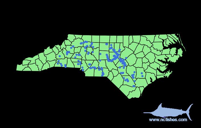 Cyprinella nivea Range in NC